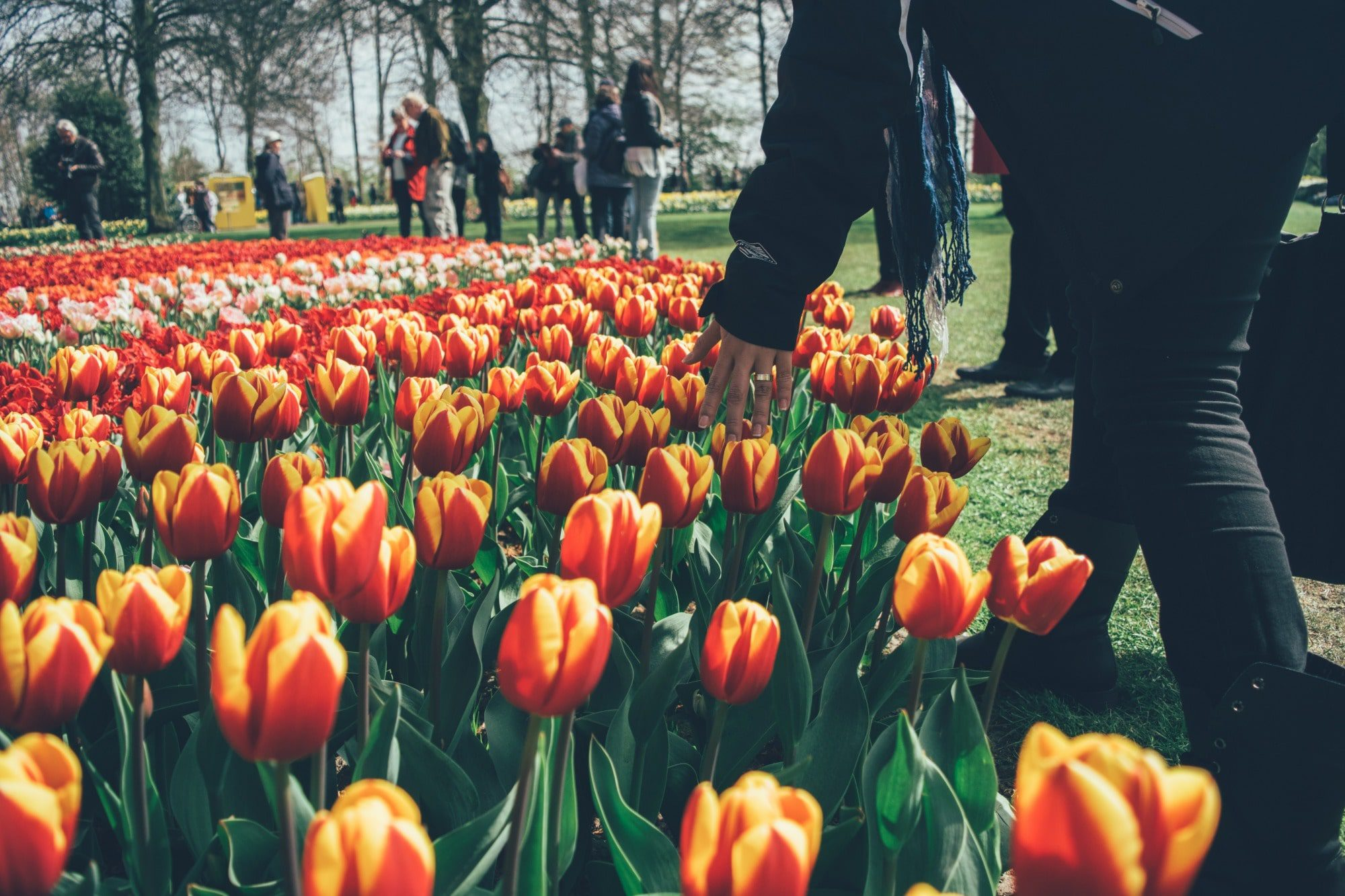amsterdam-tulips-park-min