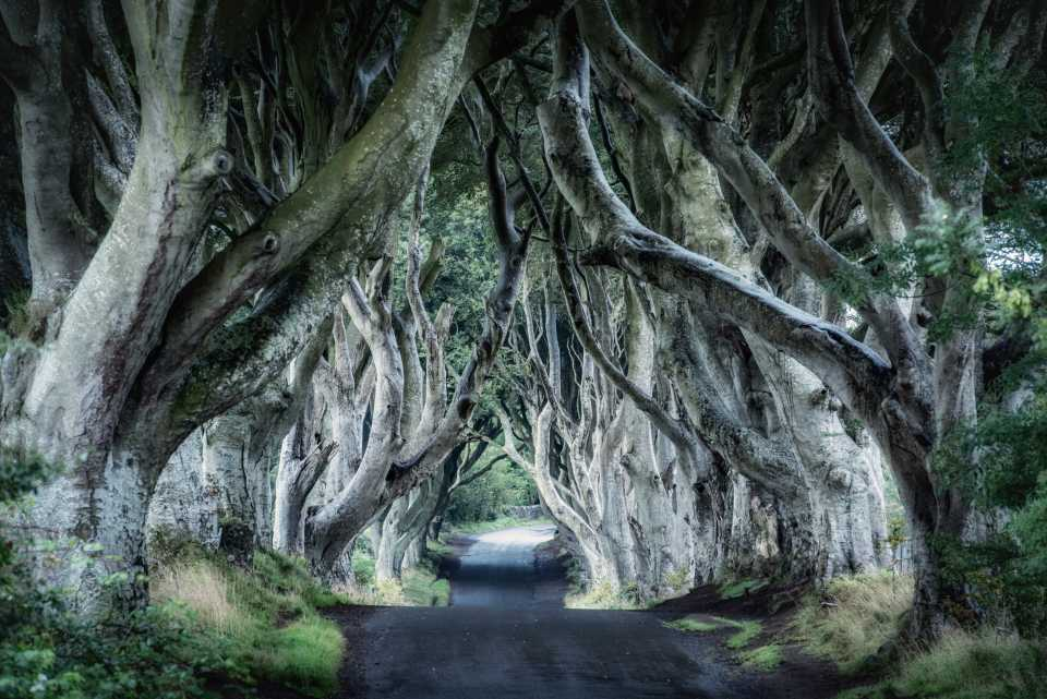 Game of Thrones filming locations in Europe: Dark Hedges